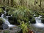 Река в Национальном парке Кахуранги