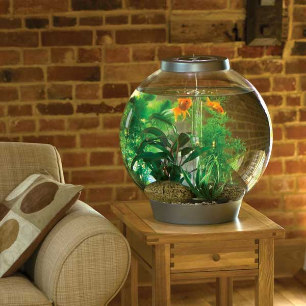 Маленький аквариум дома