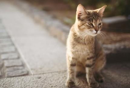 Котенок на асфальте
