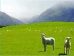 Беспокойство о священных местах в Новой Зеландии