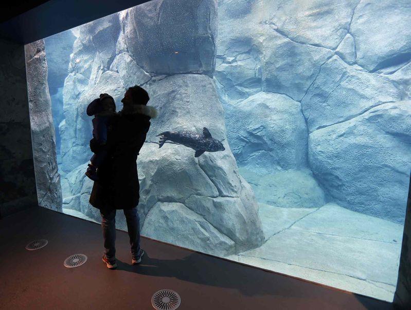 Мать с ребенком смотрят на дельфина
