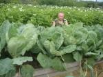 Огород Игоря Лядова