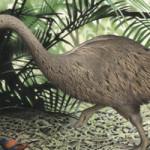 Птица Моа - вымершая на Земле птица в 1415-1435 годах