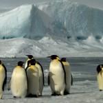Пингвины Фото