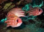 Рыбы в прибрежном море Турции