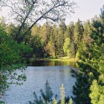 Смешанные леса в России